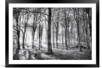 Forest of whispering winds, Framed Mounted Print