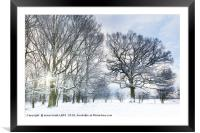 Snow covered forest with early morning sunrise, Framed Mounted Print