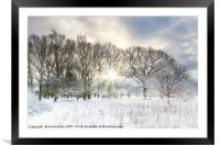 Snow covered rural trees with early morning sunris, Framed Mounted Print