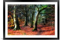 autumn walk, Framed Mounted Print