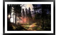 Sunset forest, Framed Mounted Print