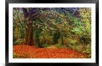autumn woods, Framed Mounted Print