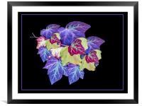 Ivy, Framed Mounted Print