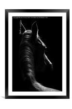 Stallion, Framed Mounted Print