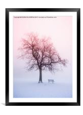 Winter tree in fog at sunrise, Framed Mounted Print