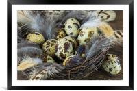 Eggs in the nest, Framed Mounted Print