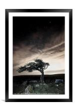 Lonesome Tree, Framed Mounted Print