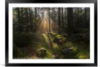 Forest Sunshine   , Framed Mounted Print