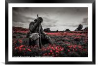 Tommy 1101 in Poppy Field, Framed Mounted Print