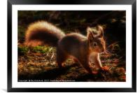 Red Squirrel or Squizz , Framed Mounted Print