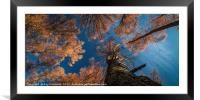 Larch Trees in Gateshead, Framed Mounted Print
