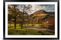 Buttermere Trees, Framed Mounted Print