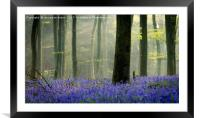 Bluebell Carpet, Framed Mounted Print