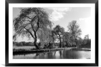 The River Wey,Guildford, Surrey,England , Framed Mounted Print