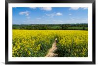 Footpath through Rapeseed field , Framed Mounted Print
