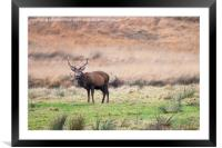 Stag etive, Framed Mounted Print