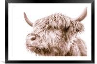 Hairy Coo Collection 3 of 7, Framed Mounted Print
