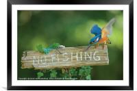 No fishing!, Framed Mounted Print