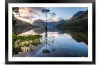 Lone Tree on Buttermere , Framed Mounted Print