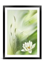 Dragonfly pair , Framed Mounted Print
