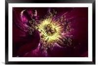 Rose heart , Framed Mounted Print