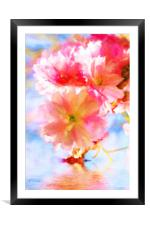 Cherry blossoms on the water , Framed Mounted Print