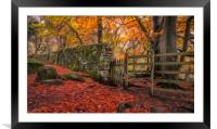 Autumn Gold in Padley Gorge, Framed Mounted Print