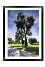 Magnificent Tree, Framed Mounted Print