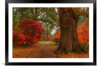 Acer's in Autumn, Framed Mounted Print