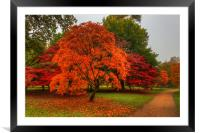 Pathway through Acer's, Framed Mounted Print