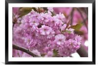 Blossom, Framed Mounted Print