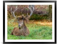 Crowned., Framed Mounted Print