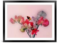 A bit of fun with some flowers, Framed Mounted Print