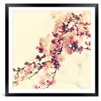 Cherry bloosom Still life , Framed Mounted Print