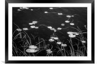 Dock Tarn, Framed Mounted Print