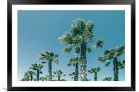 Green Palm Trees On Clear Blue Sky, Framed Mounted Print