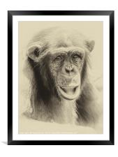 African Chimpanzee Portrait, Framed Mounted Print