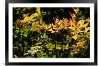 A leaf pattern, Framed Mounted Print