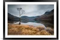 Buttermere Lone Tree, Framed Mounted Print