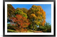 A walk into autumn, Framed Mounted Print