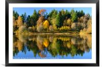Autumn colours on Penicuik Pond 2016, Framed Mounted Print