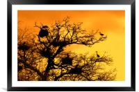 Heronry at Sunset, Framed Mounted Print