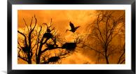 Heron Rookery at Sunset, Framed Mounted Print