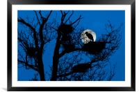 Heron on Nest at Night, Framed Mounted Print