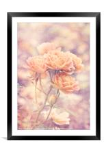 Rosa Sweet Dream (AGM) Vintage, Framed Mounted Print