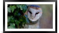Catch me if ya can! , Framed Mounted Print