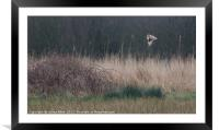SEO on a Mission , Framed Mounted Print