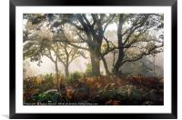 Mysterious Forest  , Framed Mounted Print