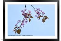 Blossom, Framed Mounted Print