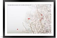 Winter Berries, Framed Mounted Print
